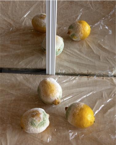 Molly Berman,Untitled (Lemons),2019. Archival inkjet print, 30 x 24 inches.