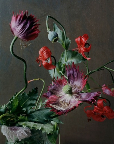 Photograph by Sharon Core of an arrangement of purple and red flowers.