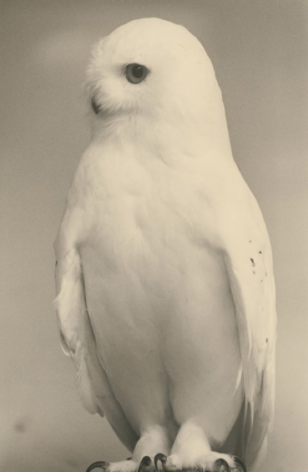 Masao Yamamoto,Untitled #1683(from the seriesKawa=Flow), 2016. Toned gelatin silver print with inked edge, 9.5x 6 inches.