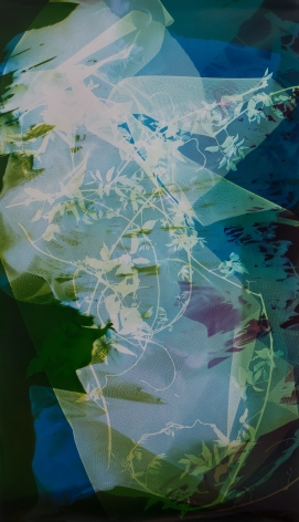 Bryan Graf, Field Recording (The Sun Room IX),2017. Unique chromogenic photogram, 53 x 33 inches.