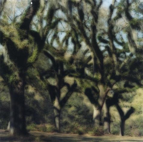 Butler, Greenwood, Louisiana (3-05-7c-10),2004,19 x 19,28 x 28,or 38 x 38 incharchival pigment print