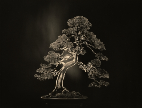 Bonsai #4000, 2018. Gelatin silver print, 10 1/8 x 13 1/4 inches.
