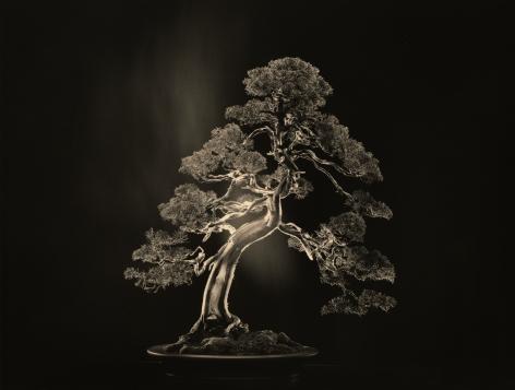 Bonsai #4000,2018. Gelatin silver print, 10 1/8x 13 1/4 inches.