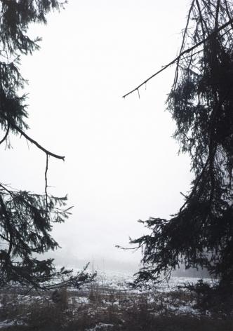 Forest #30, Untitled (Split), 2005, 20 x 14 inch chromogenic print