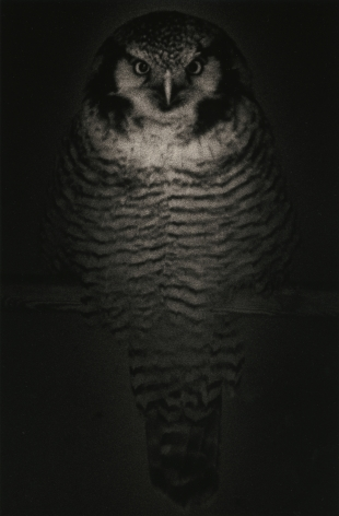 Untitled #1575 (from the series Kawa=Flow), 2009, Platinum print, Edition 72 of 280,