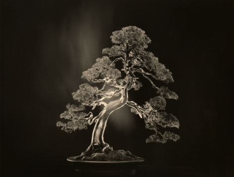 #4000 from the series Bonsai, 2018, 11 x 14 inch gelatin silver print