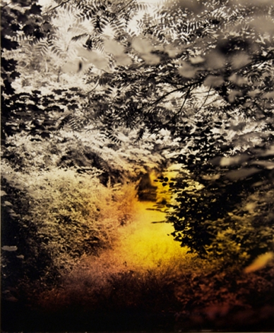 Path, from the series Wildlife Analysis, 2008,8 x 15 inch chromogenic print