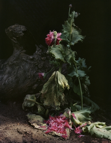 Photograph by Sharon Core from the series Understory of close-up scene in the garden.