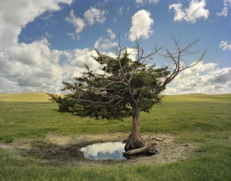 Homesteaders Tree, Cherry County, Nebraska,2013