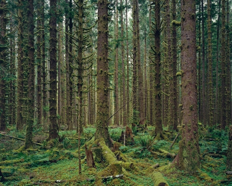 Hoh Rain Forest, Olympic National Park, Washington, 2017. Chromogenic print.