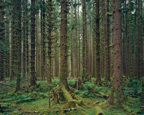 Hoh Rain Forest, Olympic National Park, Washington, 2017. Chromogenic print.