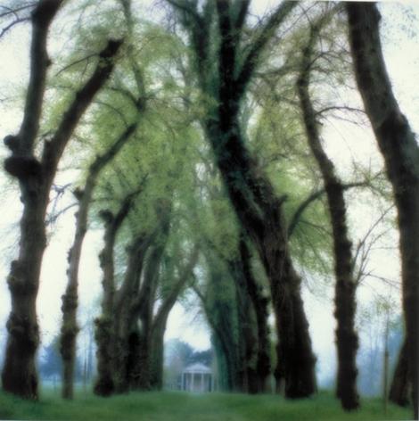 Parc de Canon, near Caen, France (5-95-48c-10), 1995,19 x 19,28 x 28,or 38 x 38 incharchival pigment print