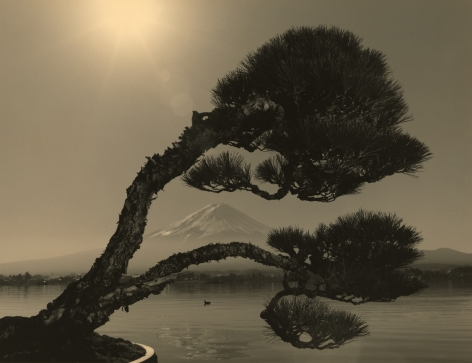 Bonsai #4024, 2019. Gelatin silver print, 10 3/16 x 13 1/4 inches.