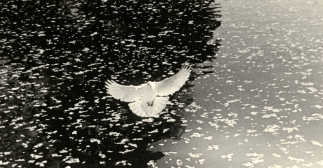 Untitled #1617 (from the series Kawa=Flow), 2012, Gelatin silver print, Edition 18 of 20