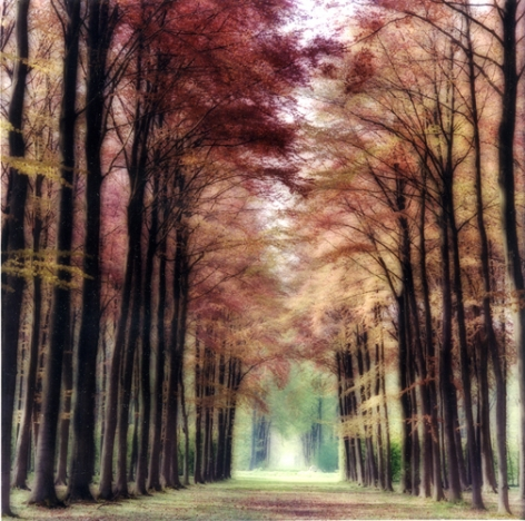 Beloeil, Belgium (4-04-26c-9), 2004,19 x 19,28 x 28,or 38 x 38 incharchival pigment print