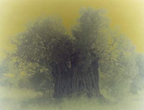 Olive13, from the seriesGhost, 2003, 47 1/4 x 59 1/8 inch archival pigment print