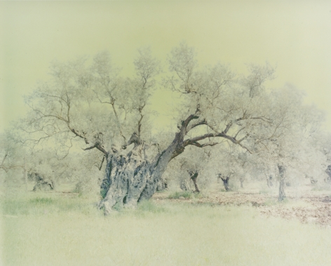 Olive 15, from the seriesGhost, 2003, 47 1/4 x 59 1/8 inch archival pigment print