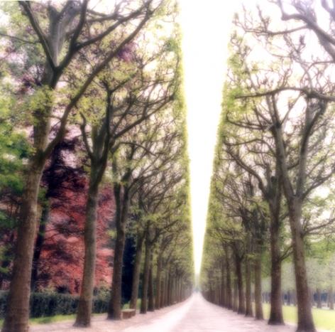 Parc de Sceaux, France (4-07-6c-9), 2007, 19 x 19,28 x 28,or 38 x 38 incharchival pigment print