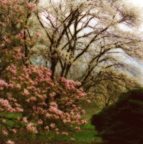 Bernheim Arboretum, Kentucky (4-08-10c-7),2008,19 x 19,28 x 28,or 38 x 38 incharchival pigment print