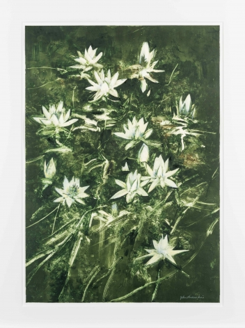 John Alexander Lilies with Hint of Blue, 2012 monotype from steel and aluminum plates with hand-coloring paper: 35 1/2 x 24 3/4 inches frame: 43 1/2 x 33 inches signed bottom right front (JoA-166)