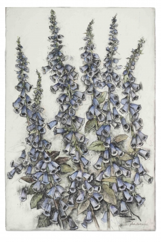 John Alexander  Foxgloves in Love, 2016  charcoal, pastel and watercolor on paper  59 3/4 x 40 inches