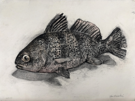 John Alexander  Black Drum Fish, 2014  charcoal and watercolor on paper  22 x 29 1/2 inches  Inquire