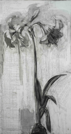 Karin Broker  amaryllis goodbyes, 2013  Conte on formica with leather bound book  78 x 42 x 3 inches