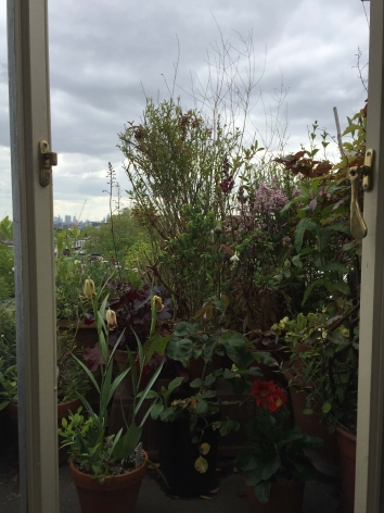 view out a window of lots of foliage