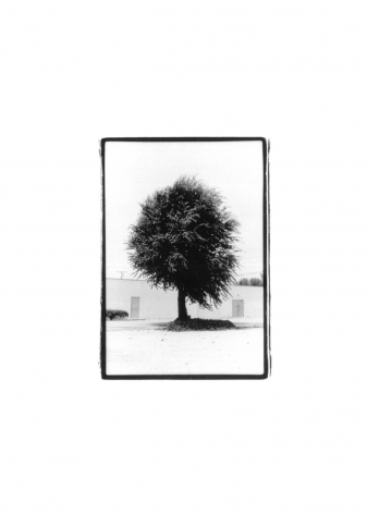 photo of a palm tree