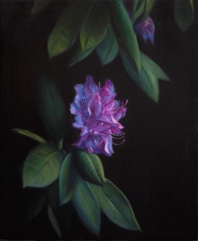 TM Davy Rhododendron (2)