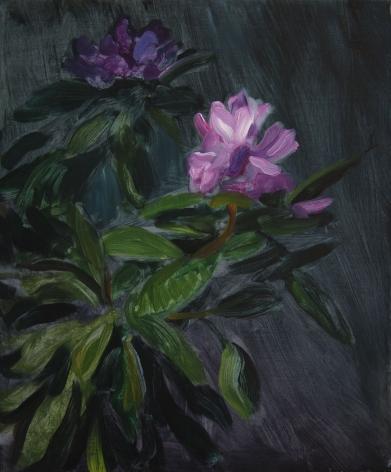 TM Davy Rhododendron