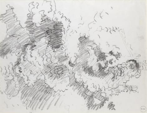 Albarellas Maple Tree, 1960, Crayon on paper