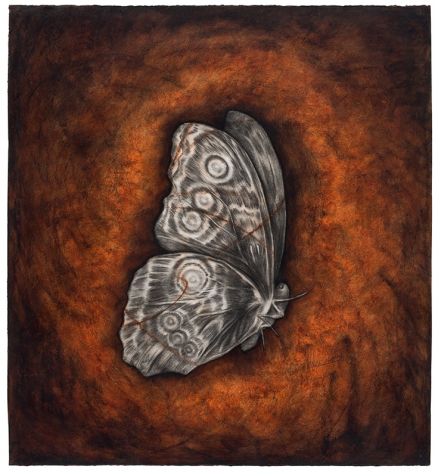 Moth, 1995 Oil stick and charcoal on paper
