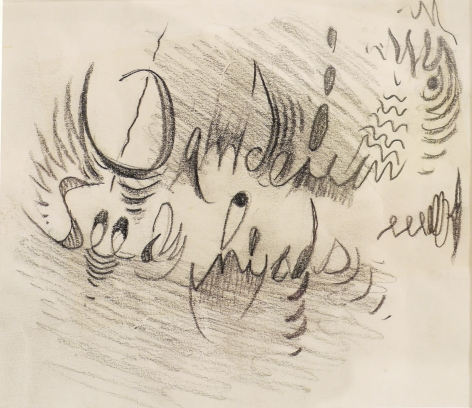 Doodle 6 - Dandelion Seed Heads, n.d., Pencil on paper