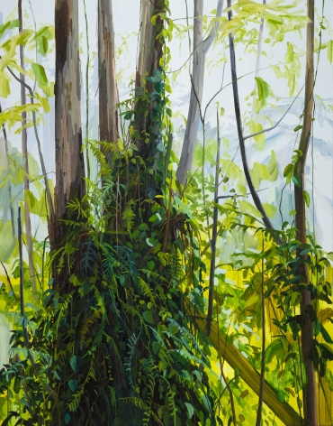 Trees and Ferns, 2019