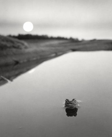 Ristisaari, Finland (frog in water), 1974, Gelatin silver print