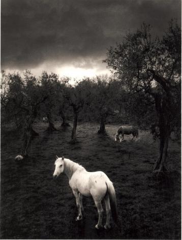 Cilento, Italy (white horse),2000, Toned gelatin silver print