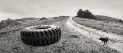 Venehjärvi, Karelia, Russia (dog and tire), 1992, Gelatin silver print