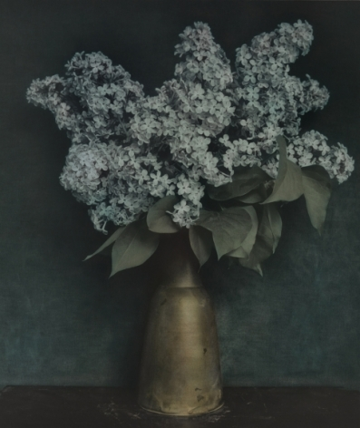 Untitled (Lilac), Zechin, 2014, Gelatin silver print with applied oil paint