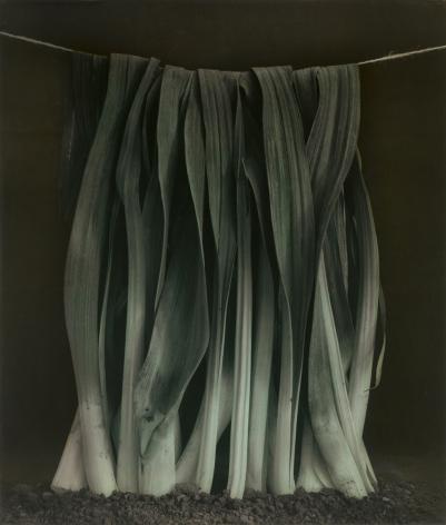 Untitled (Leek), Wiepersdorf, 2010, Gelatin silver print with applied oil paint