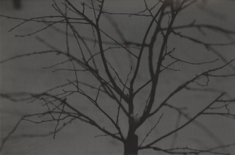 Untitled (branches), 2009