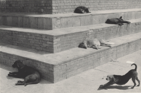 Swayambhunath, Nepal (dogs on steps), 1994, Gelatin silver print