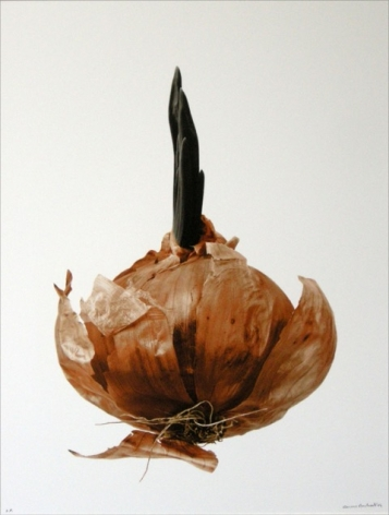 Oignon rouge germé (Red sprouted onion), 2003, printed 2004