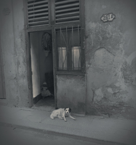 Dog and Doll, Havana, 2003, Toned gelatin silver print