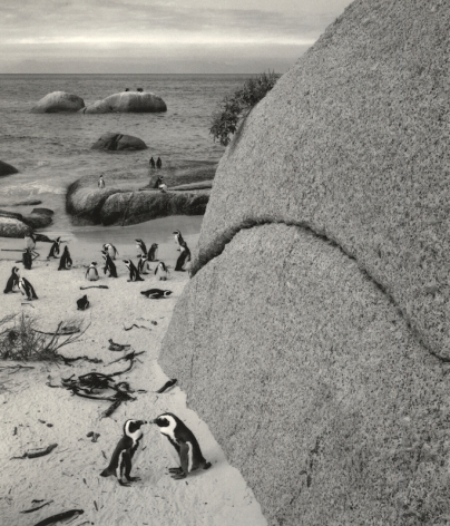 Bolders Beach, South Africa(African penguins), 2002