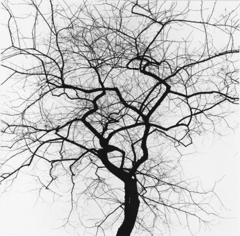 George Tice, Tree #14, New York