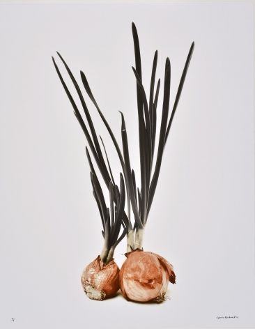 Deux Oignons Germés (Two sprouted onions), 1985, printed 2004