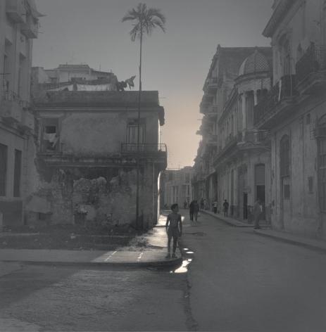 Palm Tree, Havana, 2003