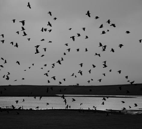 Hamnavoe, Yell, Shetland, 2016, Gelatin silver print