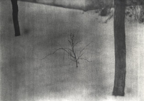 Untitled (sapling), 2009